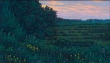 Artwork preview: Untitled (summer fields)
